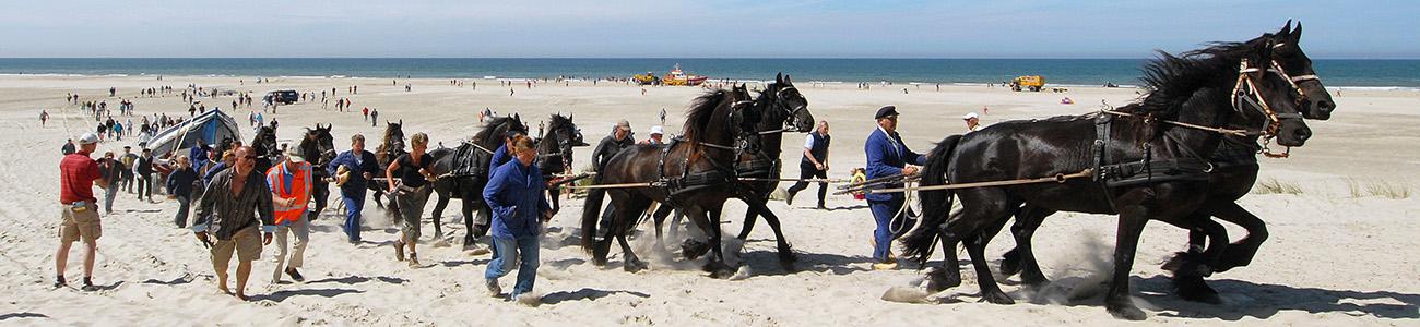 schumacher paarden_kl